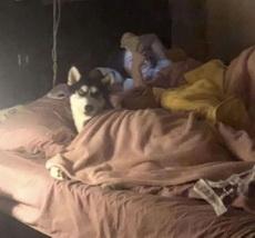 狗子不但睡了你的床