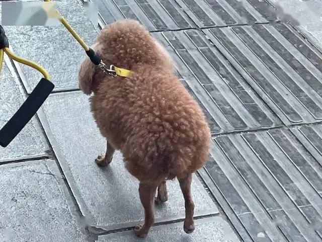 碰到一只长得像羊的狗