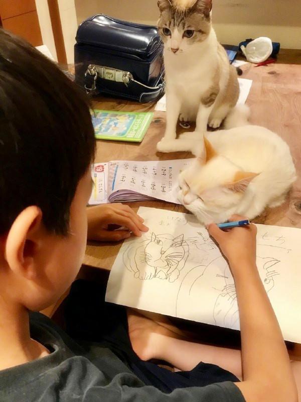 看了他画的画,猫哭了!我看后大喊:媳妇,你的画像