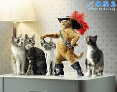 性感海盗猫