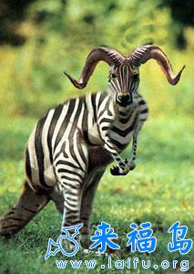 这是什么动物啊!