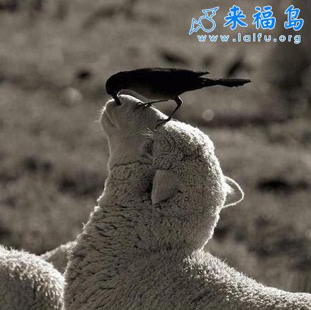 帮我抠抠鼻_动物图片_来福岛爆笑娱乐网