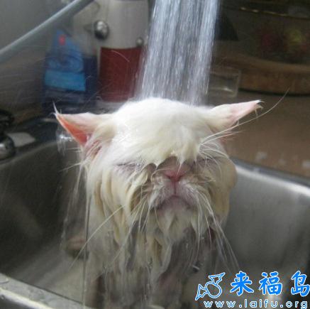 寡人洗澡的时候麻烦你们不要拍照好么?[动物图片]