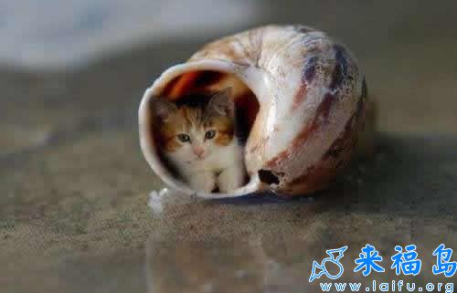 这年头猫也蜗居了[动物图片]