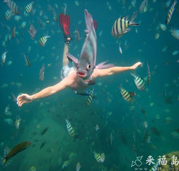 海底惊险鱼头人_动物图片