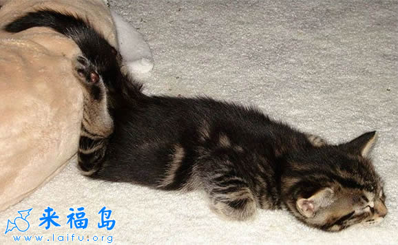 这睡觉姿势萌爆了_动物图片