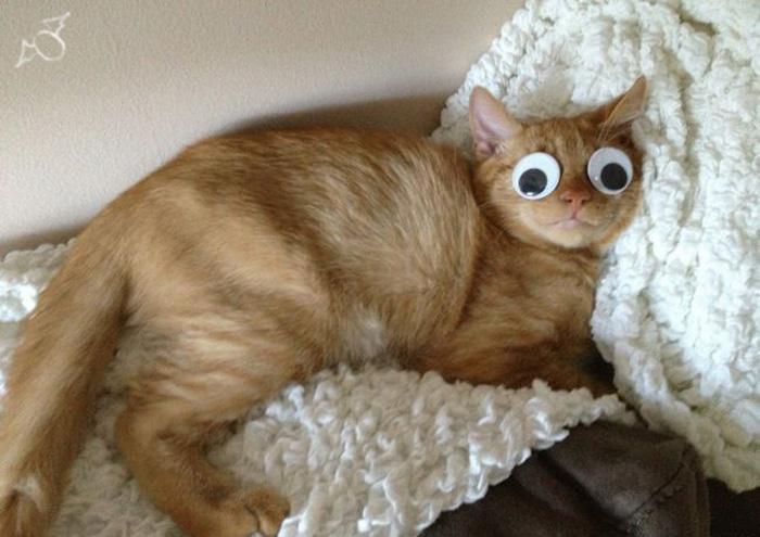 囧-大眼猫挺可爱-樱桃小丸子搞笑图片