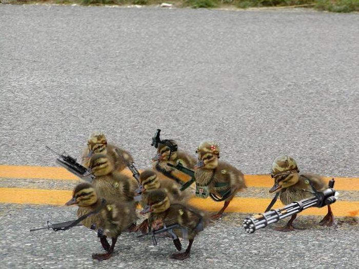 小鸭子战队_动物图片