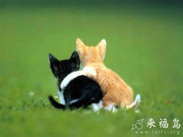 相亲相爱的两只小萌猫