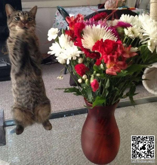 七夕节收到花的表情_动物图片