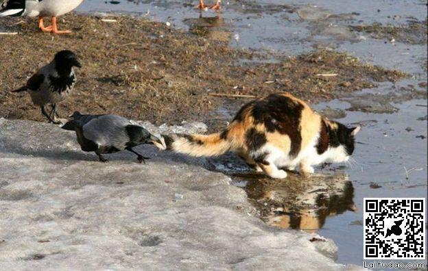 动物遇到危险的图片