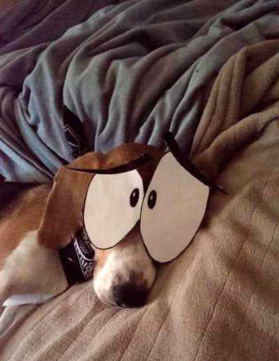 恶搞睡着的汪星人!_动物图片_来福岛爆笑娱乐网