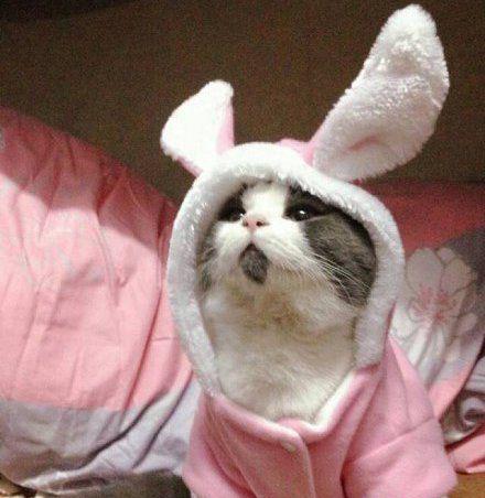 我是一只高冷的萌兔纸_动物图片