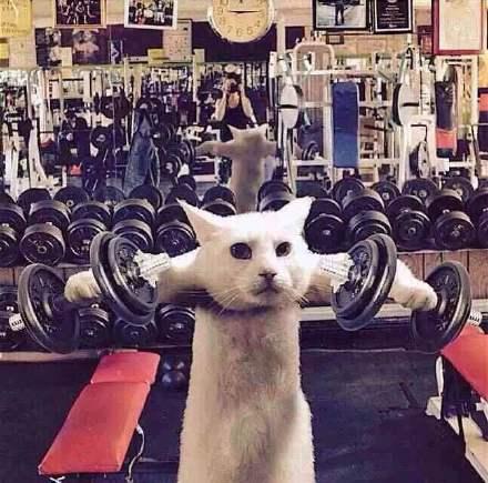 Funny Cat Meme Gif