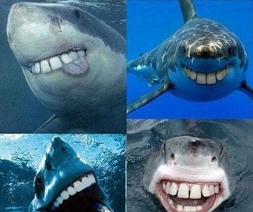 鲨鱼没有尖牙齿就可爱了 - 搞笑图片盒子