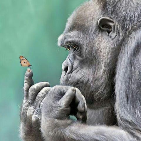 有空的时候我会思考一下猴生的意义!_动物图片_来福岛