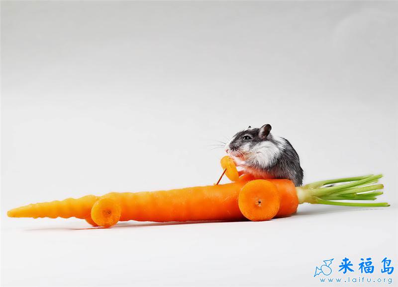 可爱鼠鼠与它的爱车_动物图片