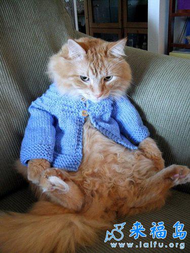 猫咪的毛线衣_动物图片