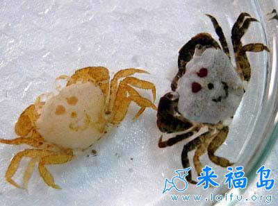 搞笑的小螃蟹_动物图片