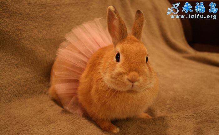 可爱兔公主_动物图片