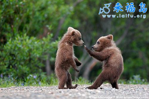 小熊学功夫_动物图片