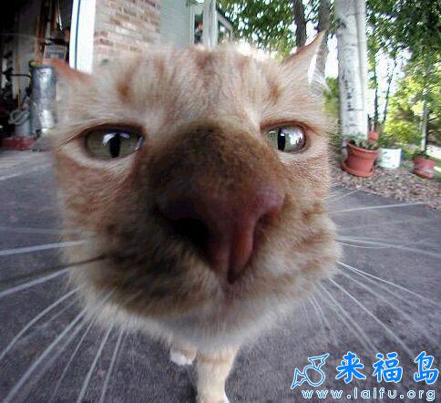 大头猫唷_动物图片