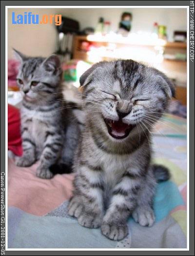 会笑可爱猫咪图片
