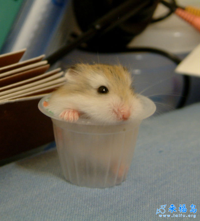超可爱的小老鼠_动物图片