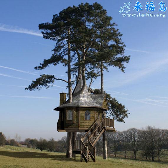 修在树上的房子