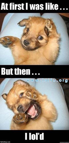 可爱的狗狗_动物图片_来福岛爆笑娱乐网