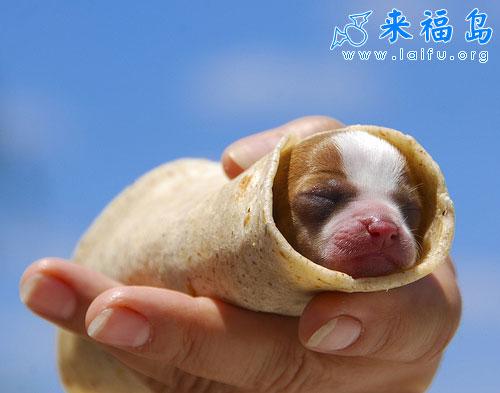 可爱小甜点_动物图片