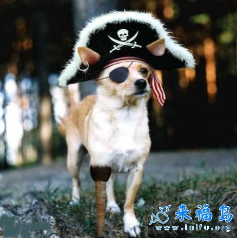 海盗狗_动物图片