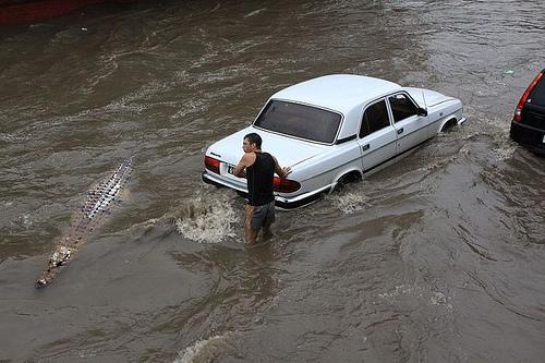 动物园遭水灾了?[动物图片]