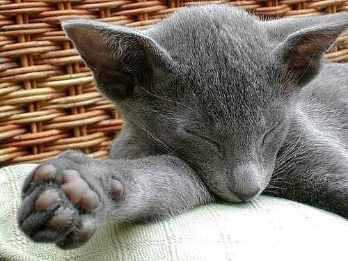动物们的可爱睡姿